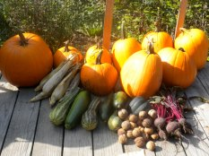 Homestead Fall Harvests