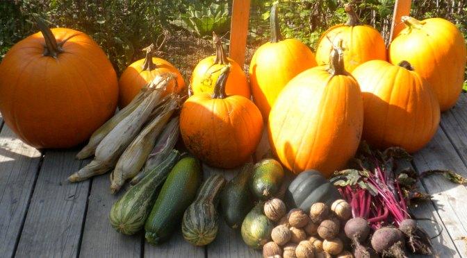Homestead Fall Harvests