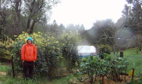 Homesteading, Seed Saving Kale