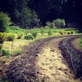 Springtime Seedling Planting