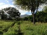 Tamarind Tree: Camp Mokuleia 10 Acre Project, Oahu