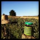 Enjoying Life, Harvesting Raspberries: Taylor Maid Farms, CA