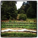 Rotational Veggie Beds: Taylor Maid Farms, CA