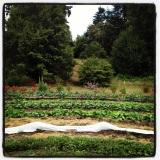 Rotational Veggie Beds: Taylor Maid Farms, CA