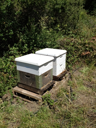 Adding Beehives to Taylor Maid Farms, CA