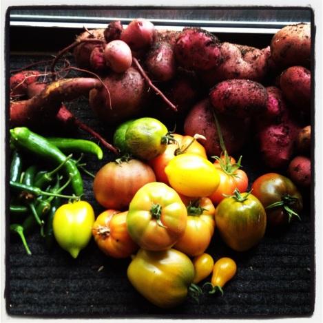 Tomato, Pepper, Potato Harvest: Taylor Maid Farm, CA