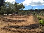 Swale Beds, Blackbird Farm: Mendocino, CA