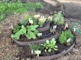Herb Spiral Blackbird Farm: Mendocino, CA
