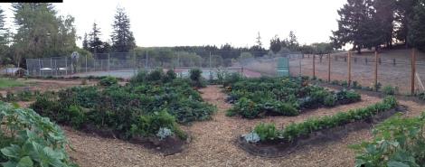 Nearing Final Harvest, Blackbird Farm: Mendocino, CA