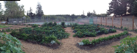 Nearing Final Harvest, Blackbird Farm: Mendocino, CA