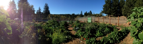 Overview of Blackbird Farm Garden: Mendocino, CA