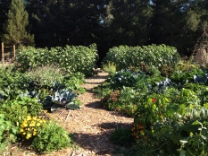 Amphitheater Planting, Veggie Beds Blackbird Farm: Mendocino, CA