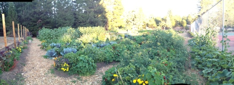Blackbird Farm Overview Veggie Beds: Mendocino, CA