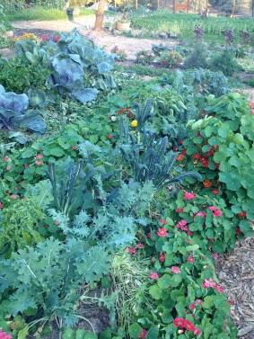 Kale Veggie Beds Blackbird Farm: Mendocino, CA