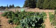 Rotational Veggie Beds Blackbird Farm: Mendocino, CA