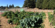 Rotational Veggie Beds Blackbird Farm: Mendocino, CA