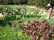 Wild Seeded Field Inspired by Masanobu Fukuoka: Mendocino, CA
