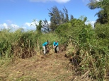 Root Balling Invasive Species, Clearing Orchard Area: Camp Mokuleia 10 Acre Design