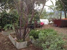 Native Species Raised Bed Area: Camp Mokuleia, Oahu