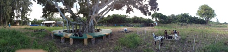 Rotational Goat Grazing: Camp Mokuleia, Oahu