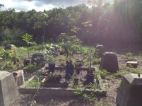 Propagation Station 2014: Camp Mokuleia 10 Acre Design