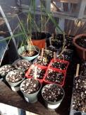 Seeding Starters: Camp Mokuleia, Oahu