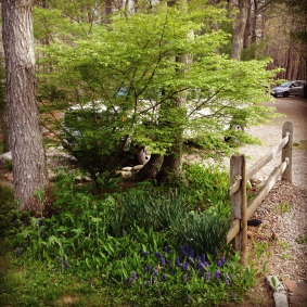 Polyculture Pocket-Punkhorn Farm, MA (may 2014)