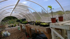 Hoop House Nursery